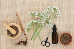 Valerian Herbal Medicine royalty free stock image