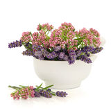 Valerian and Lavender Herb Flowers. In a porcelain mortar with pestle over white background royalty free stock photos