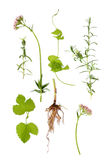Valerian, Lavender and Hop Herbs Stock Photography