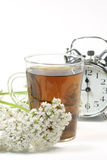 Valerian tea. Herbal tea in a glass with valerian blossoms and alarm clock over white background Royalty Free Stock Photo