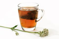 Valerian Tea. Herbal tea in a glass with teabag and valerian on bright background Royalty Free Stock Photo