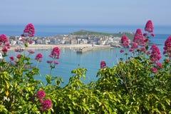 Valeriana rossa selvaggia della st Ives, Cornovaglia Regno Unito. Fotografie Stock Libere da Diritti