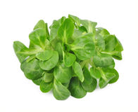 Valerianella lettuce Royalty Free Stock Images