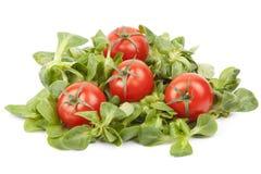 Valerianella Locusta, Feldsalat, Kirschtomate, der Feldsalat Stockbilder