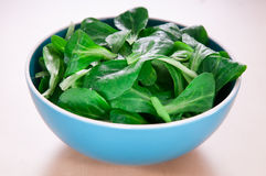 Valerianella/valerianella in ciotola ceramica blu Fotografia Stock