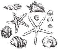 Valet av havet shells teckningar Arkivfoto