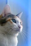 Valeurs familiales animales de favori de chat Image stock