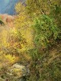 Valey redigiu nas cores imagem de stock royalty free