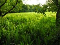Valey rolna ziemia Zdjęcia Stock