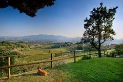 Valgiano, Lucca - Toscânia, Itália Fotografia de Stock