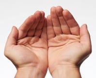 Valk på mänskliga händer arkivfoton