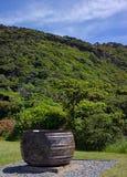 Valkruka på den Kapiti öfågeln Santuary, Nya Zeeland Royaltyfria Foton