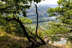 Vallée Allemagne de la Moselle pendant l'été Photographie stock libre de droits