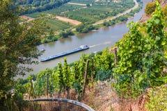 Vallée Allemagne de la Moselle de vignoble Images stock