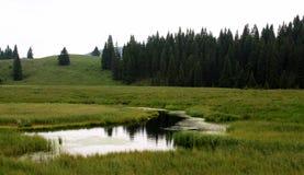 Vallée avec la rivière ou le lac et pins pendant le MOIS Image libre de droits