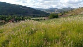 Vallée avec le champ d'herbe photographie stock libre de droits