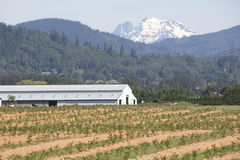 Vallée Berry Farm Images stock