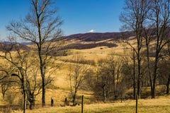 Vallée bleue d'herbe et montagne arrière de crique photographie stock libre de droits