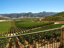 Vallée complètement des vignes, Amérique du Sud Images stock