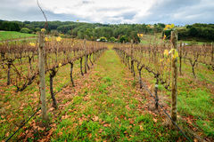Vallée d'Autumn Wine Images stock