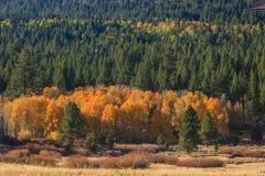 Vallée d'espoir, couleur d'automne Images libres de droits