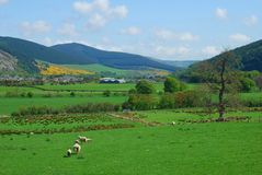 Vallée d'Innerleithen et de tweed semblant est Images stock