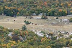Vallée dans la chute avec le fonctionnement de chevaux Image libre de droits