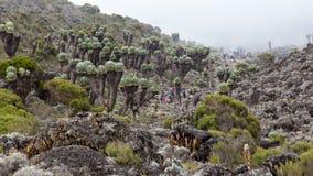 Vallée de cactus Image stock