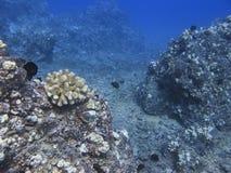 Vallée de corail Images stock