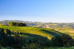 Vallée de Douro de rivière, Portugal Image stock