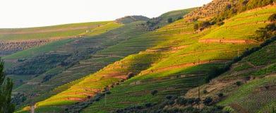 Vallée de Douro de rivière, Portugal Photographie stock libre de droits