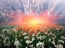 Vallée de fleur Images libres de droits