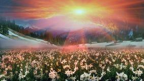 Vallée de fleur par Hoost Photo stock