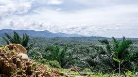 Vallée de jungle d'en haut Photographie stock