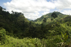 Vallée de jungle, Mindanao, Philippines Image stock