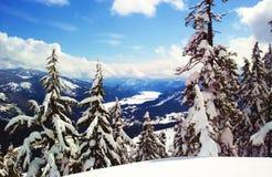 Vallée de lac congelée par arbres snow Images stock