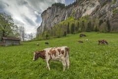 Vallée de Lauterbrunnen en Suisse Photo stock