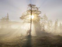 Vallée de Lurudalen, Norvège Image stock