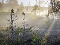 Vallée de Lurudalen, Norvège Photographie stock libre de droits