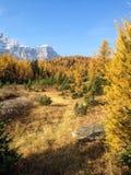 Vallée de mélèze Photos libres de droits
