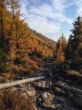 Vallée de mélèze Photographie stock libre de droits