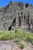 Vallée de Masca avec la verdure, Ténérife Image libre de droits