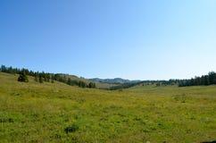Vallée de montagne avec des arbres Images libres de droits
