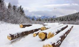 Vallée de montagne avec des rondins Image stock
