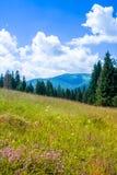 Vallée de montagne pendant le jour d'été aménagez l'été normal Images stock