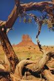 Vallée de monument encadrée par arbre Images libres de droits
