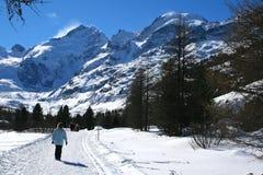 Vallée de Morteratsch Photographie stock libre de droits