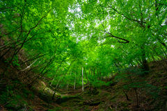 Vallée de Nishizawa dans Yamanashi, Japon Photo libre de droits