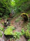 Vallée de Nishizawa dans Yamanashi, Japon Photographie stock libre de droits