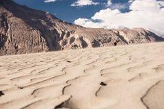 Vallée de Nubra Photos libres de droits